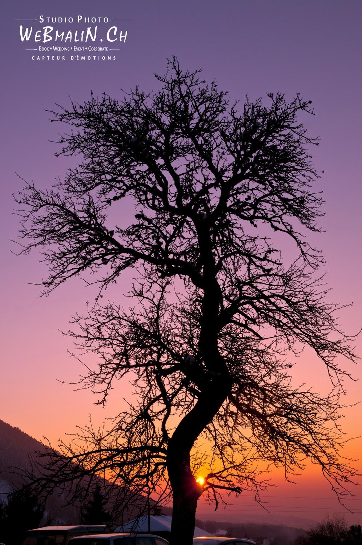 Portfolio - Nature - Arbre de Vie
