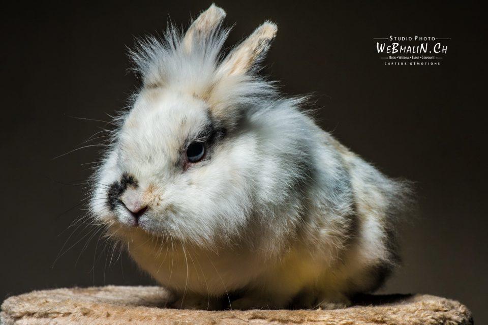 Portfolio - Animal Domestique - Lapin
